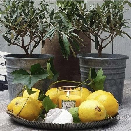 "Citronella Kerzenglas ""Jungle"", 65/70"